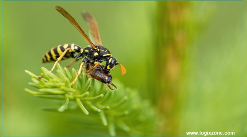 Bees and Wasps are valuable for human health