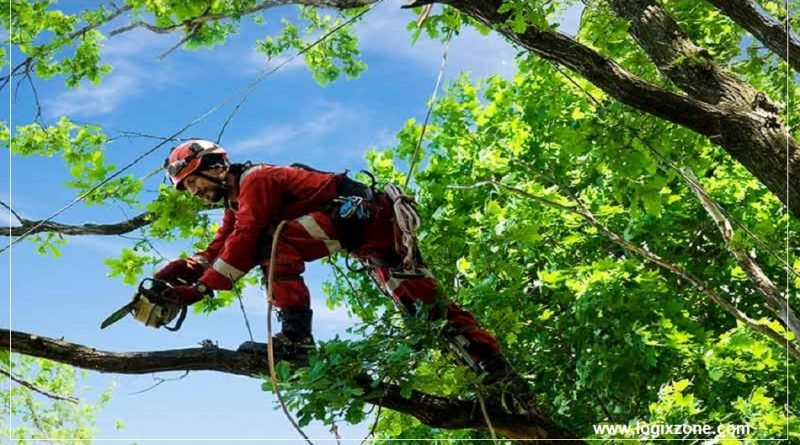best Tree Trimming Company