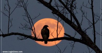 What Is a Harvest Moon? When to View It in September 2021