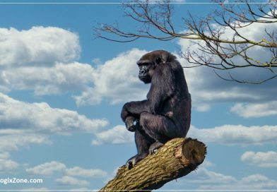 Can We Save Africa Great Apes - Monkeys?