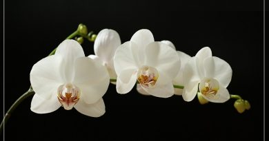 Here are the list of The 20 most beautiful white flowers in the world